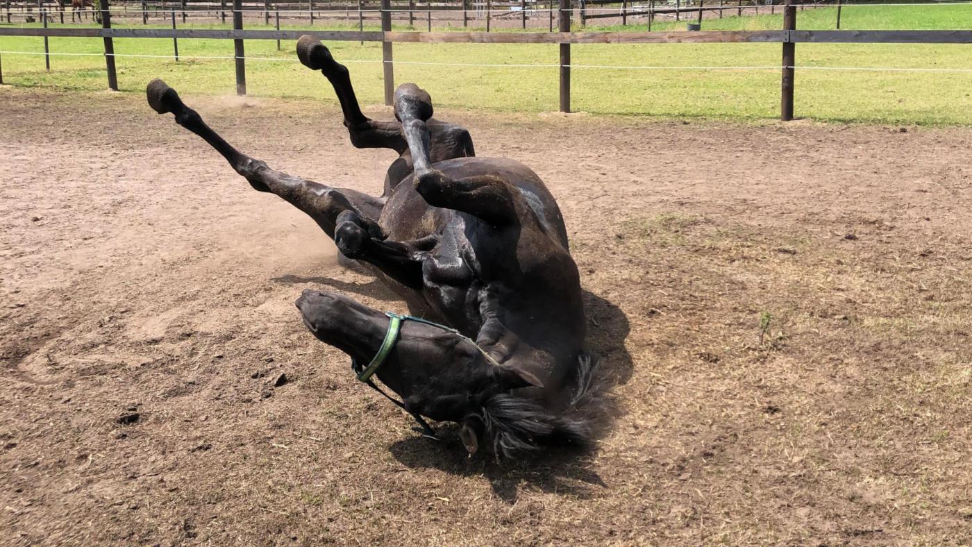 Help, mijn paard heeft koliek!