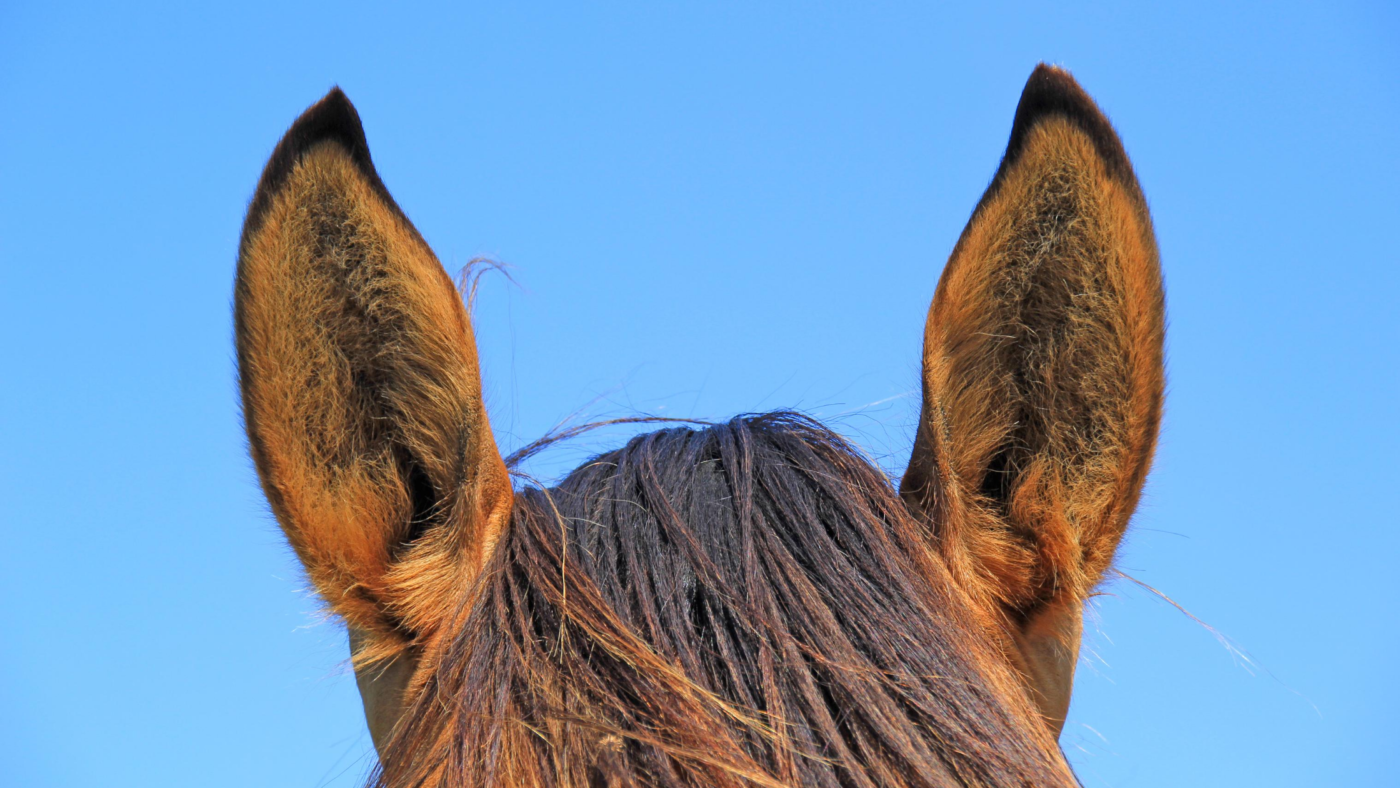 Hoe kan ik 'praten' met mijn paard?