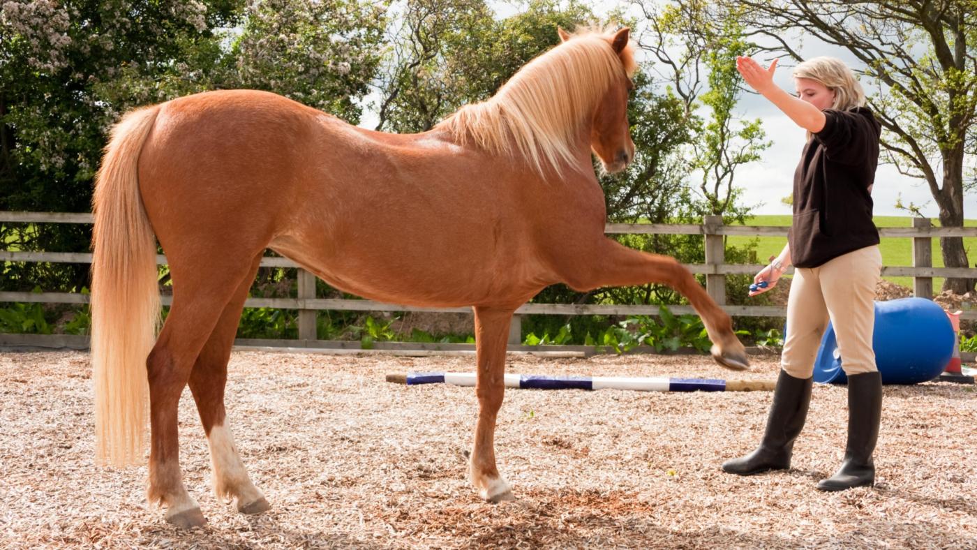 In gesprek met paarden