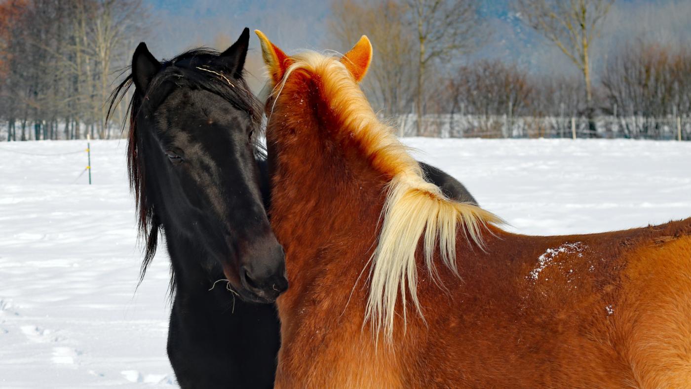 Wintertips voor jou en je paard