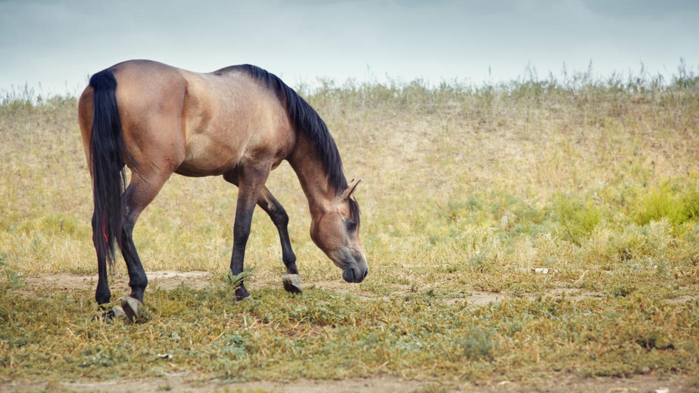 Speurwerk met paarden